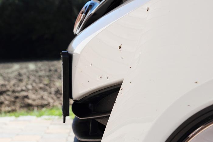 C mo eliminar los restos de mosquitos noticias de coches for Como eliminar los mosquitos del jardin